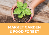 market garden and food forest/