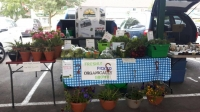 fresh picked organically grown flowers and food