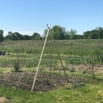The Iroquois Planting System